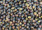 Mangostan - czym jest ten owoc, jak należy go jeść?