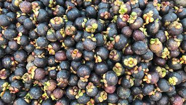 Mangostan -owoce tej rośliny zawierają cenne minerały i witaminy