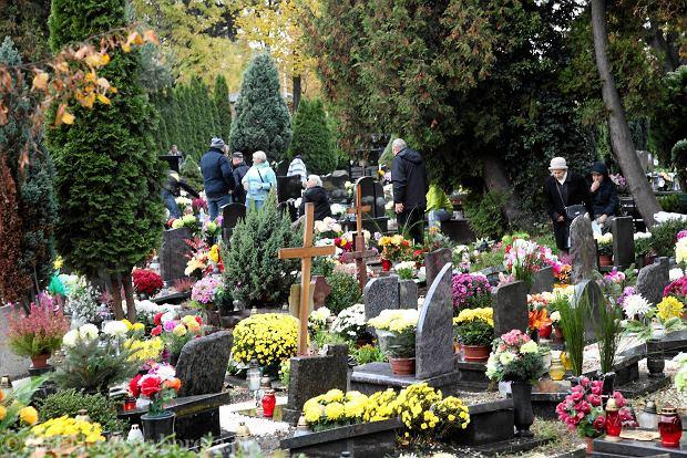 Zdjęcie numer 36 w galerii - Wszystkich Świętych we Wrocławiu. Cmentarze w kwiatach [ZDJĘCIA]