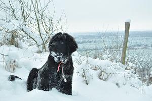 Nowofundland - czy to odpowiednia rasa psa dla rodziny z dziećmi? [charakter, pielęgnacja, opinie]