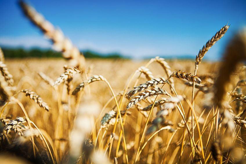 Żywności przybywa wolniej niż ludzi na świecie. To sprawia, że rynek żywności jest bardziej podatny na kryzysy.