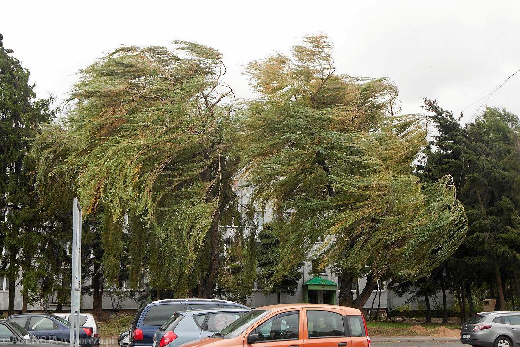 Silny wiatr. Zdjęcie ilustracyjne