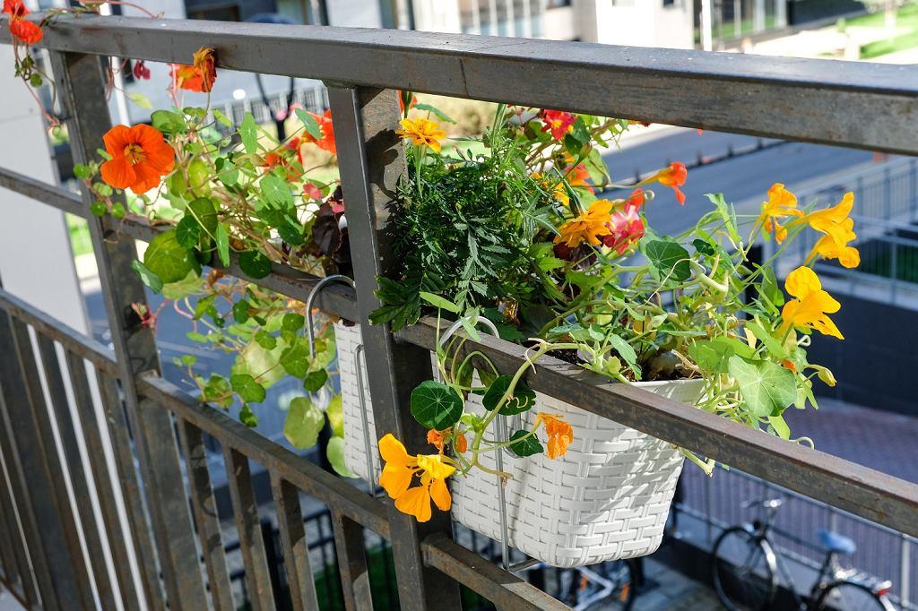 Doniczki na balkon do kwiatów wiszących