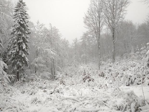 Zdjęcie numer 0 w galerii - Za taką zimą wszyscy tęskniliśmy. Pomorze niemal całe białe