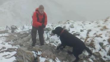 Labrador na Giewoncie