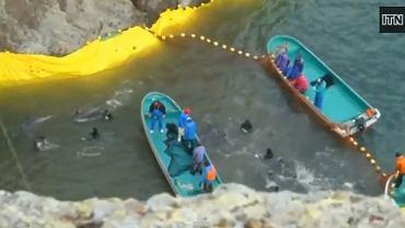 Zatoka w której rybacy wyławiają delfiny