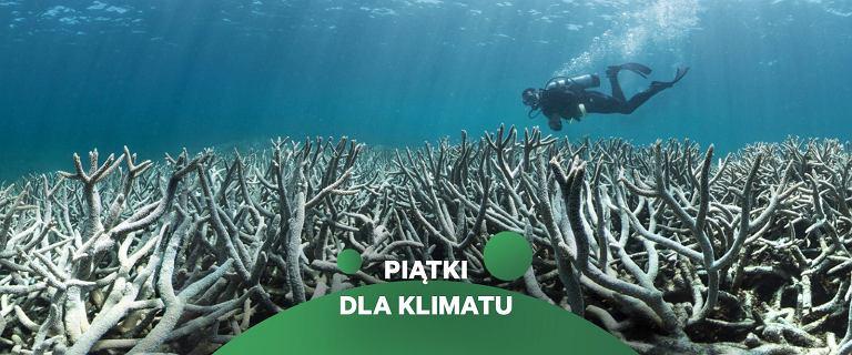 Wielka Rafa Koralowa blaknie trzeci raz w ciągu pięciu lat