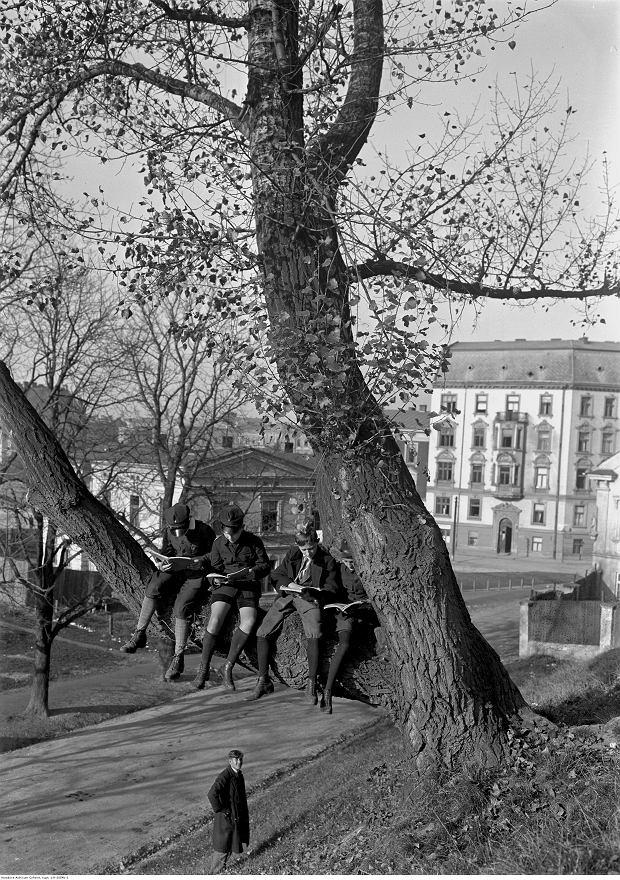 Nauka na drzewie. Kraków, październik 1928