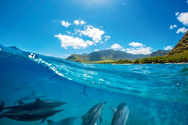 Delfiny pływające u wybrzeży wyspy Reunion