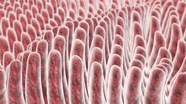 Kosmki jelitowe mają palczasty kształt