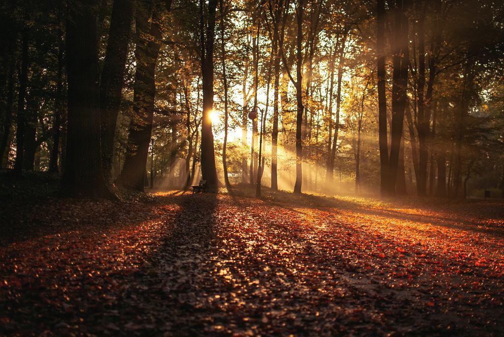 Pogoda długoterminowa dla Europy Środkowej. Jaka będzie jesień 2021 roku? (zdjęcie ilustracyjne)