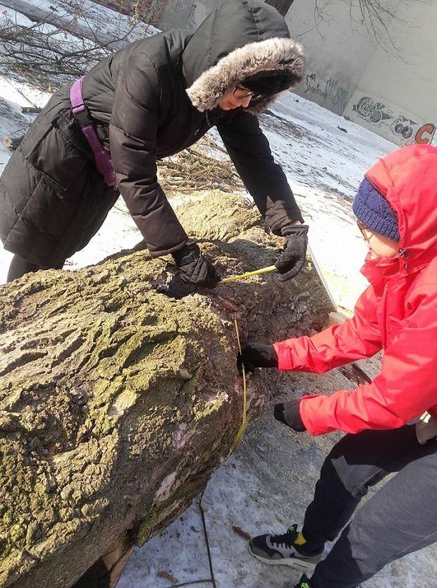 Wycinka drzew przy ul. Stalowej w Warszawie. Mieszkańcy wstrzymali prace dewelopera.