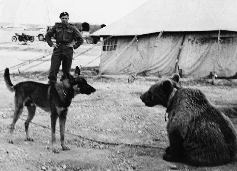 Niedźwiedź Wojtek będzie miał w Warszawie swój skwer