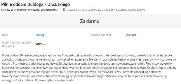 Mieszkaniec Ostrowa Wielkopolskiego odda buldoga