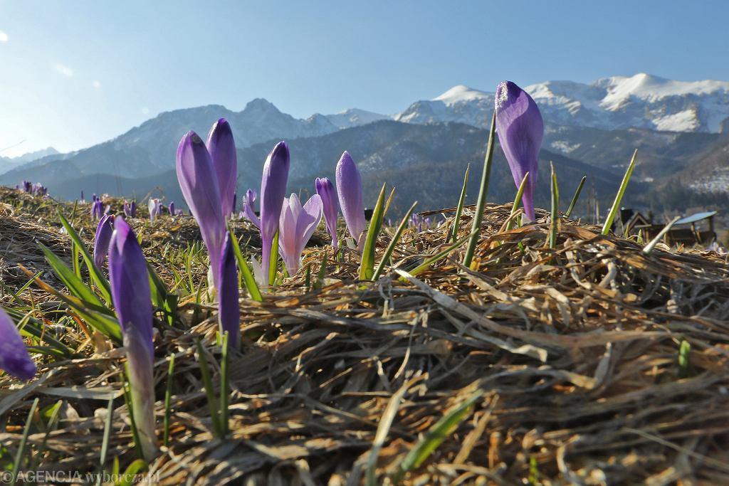 Kiedy przyjdzie wiosna? Są progrozy synoptyków z IMGW (zdjęcie ilustracyjne)