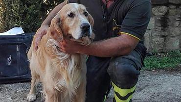 10 dni po trzęsieniu ziemi we Włoszech z ruin wydobyto żywego psa