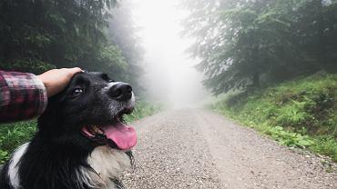 Pies na spacerze/ zdjęcie ilustracyjne