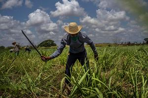 Kuba. Upadek światowej potęgi produkcji cukru