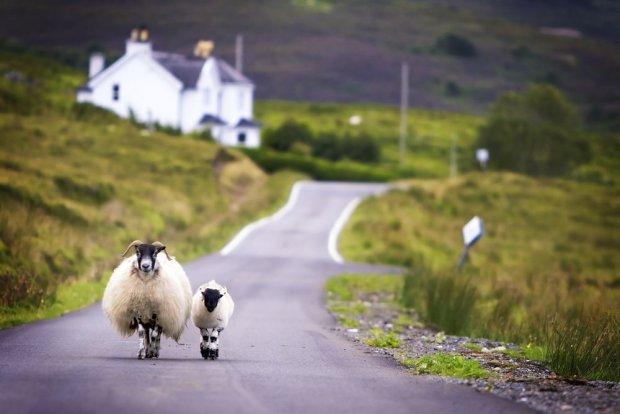 Szkocja / fot. Shutterstock