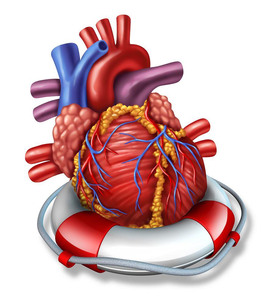 Stan przedzawałowy pojawia się, gdy do serca nie jest dostarczana odpowiednia ilość krwi, a z nią również tlenu.