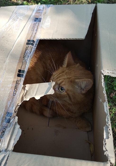 Porzuconym w pudle kotem zaopiekował się Patrol Eko.