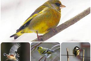 W mieście żyje mnóstwo ptaków. Czym je karmić , by im nie zaszkodzić?
