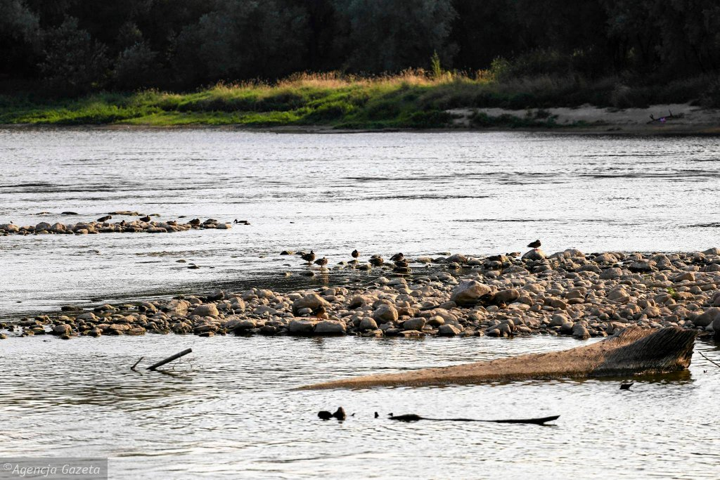 Niski stan wody w Wiśle na wysokości mostu Północnego