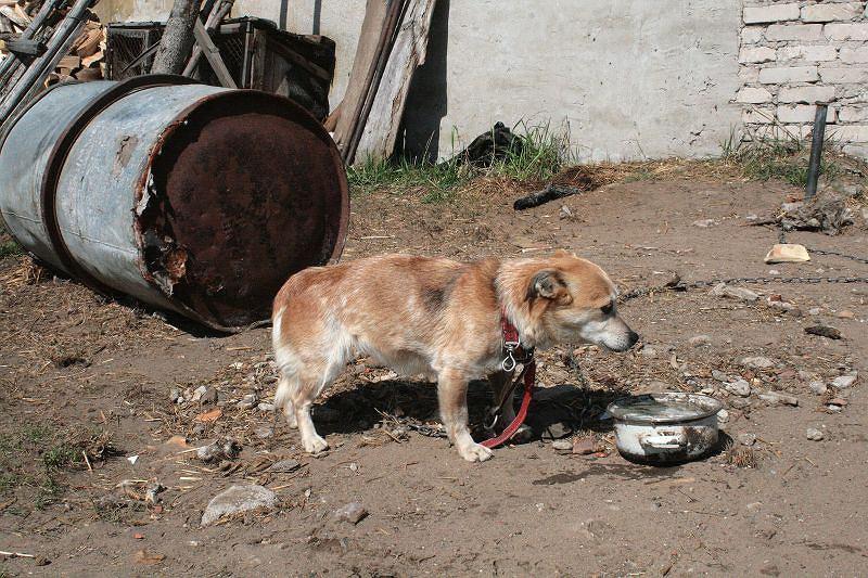 Przyjechali ratować psy, zastali leżącego 92-latka i zwierzęta przykute do beczek