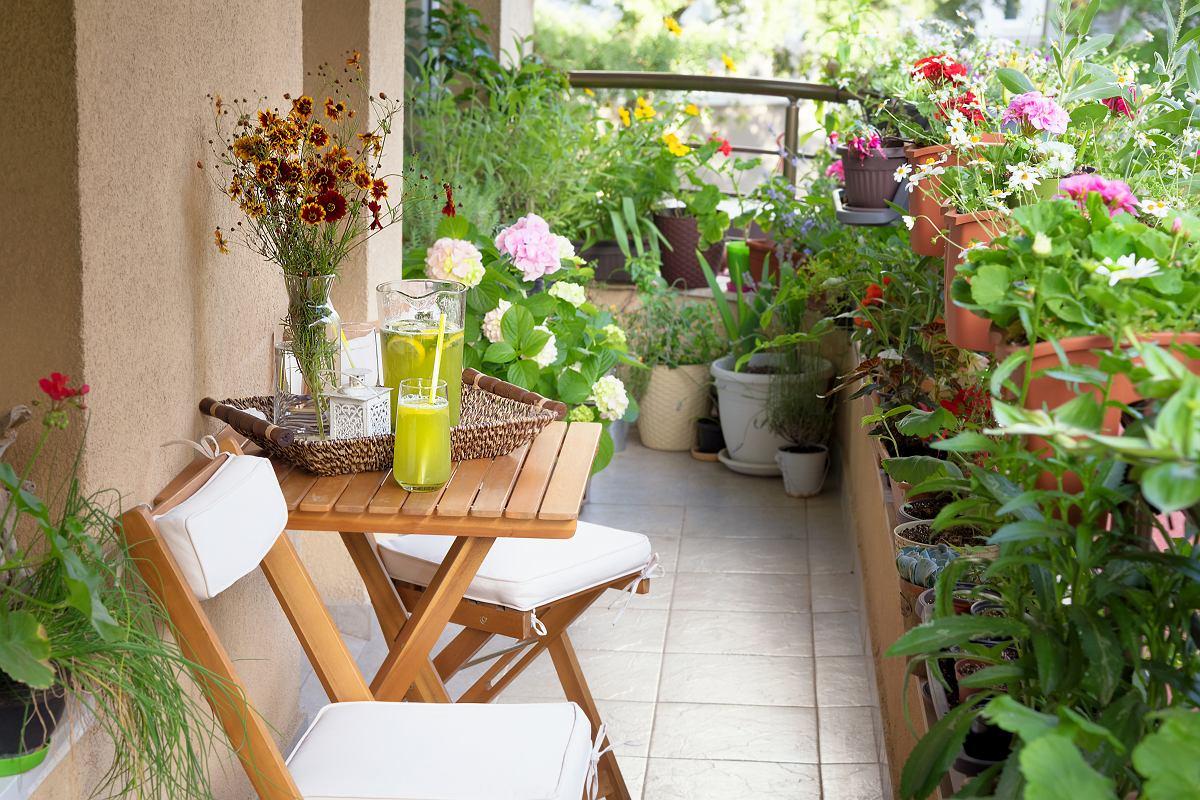 Kwiaty Balkonowe Niewymagajace Czestego Podlewania I Lubiace Cien