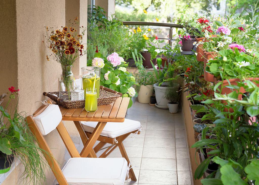 Kwiaty balkonowe nie wymagające częstego podlewania są dobrym rozwiązaniem na okresowe susze