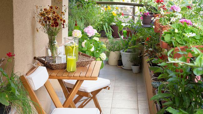 Kwiaty balkonowe nie wymagające częstego podlewania. Są odporne na suszę