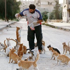 Kiedy większość ludzi opuściło Masaken Hanano z powodu regularnych ostrzałów, jeden człowiek wraca tam codziennie, żeby dokarmiać bezdomne koty