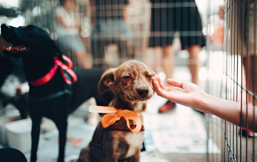 Koncert charytatywny na rzecz schroniska dla zwierząt