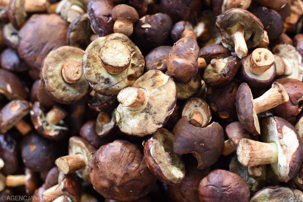 Sprzedaż grzybów (zdjęcie ilustracyjne)