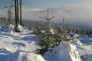 Polskie góry na zimę. Łatwe, trudne i średnie trasy