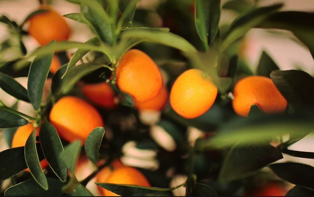 Magia Świąt w Starej Oranżerii - Łazienki Królewskie zapraszają na warsztaty rodzinne