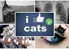 Kociara- wszystkie akcesoria i dodatki z wizerunkami kotów, przegląd