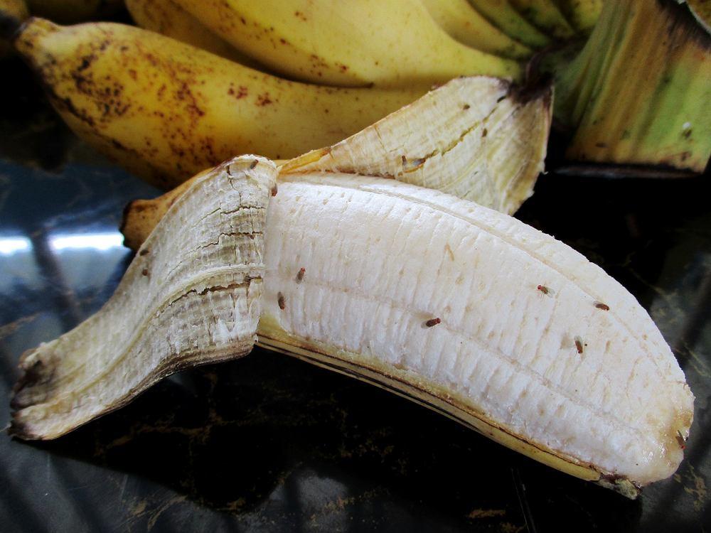 Sposoby na muszki owocówki - domowe i nie tylko