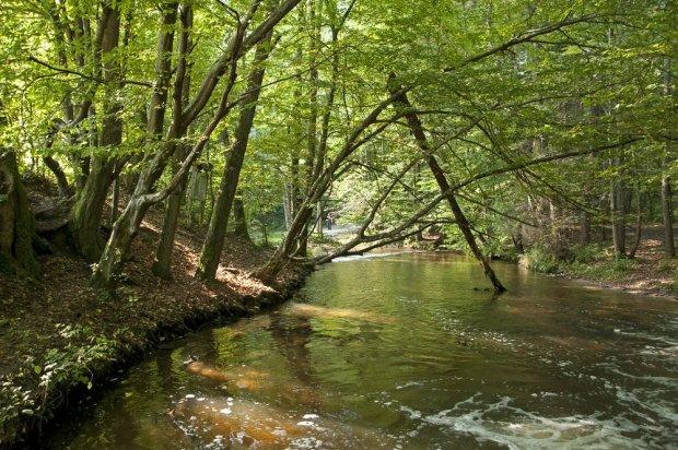 Roztoczański Park Narodowy, Szumy nad Tanwią / fot. Shutterstock