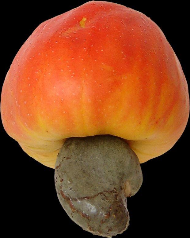Owoc nerkowca