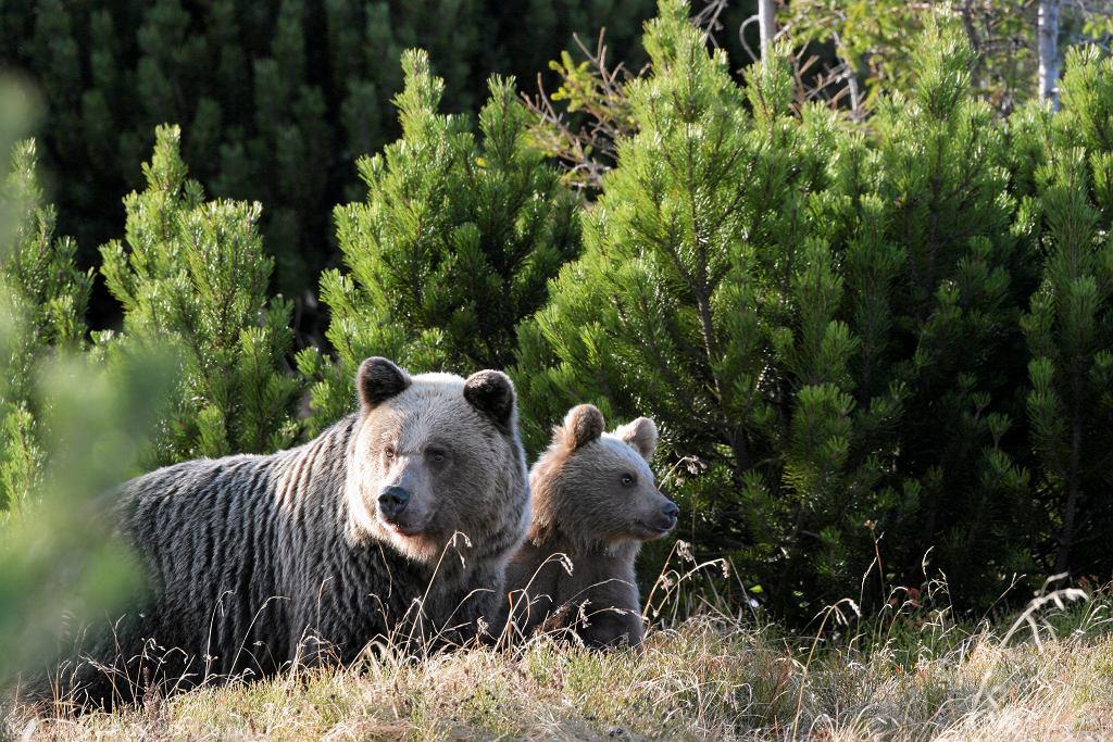 Tatry. Od 21 maja otwarte szlaki w okolicach Doliny Gąsienicowej (zdjęcie ilustracyjne)