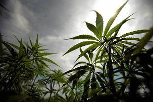 Minister zdrowia nie chce legalizacji marihuany. Próbowałem raz. Nigdy więcej