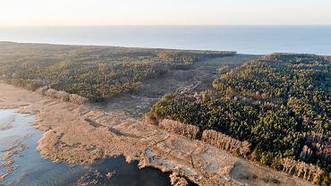 @Mierzeja Wislana , wyciete drzewa na terenie przyszlego przekopu