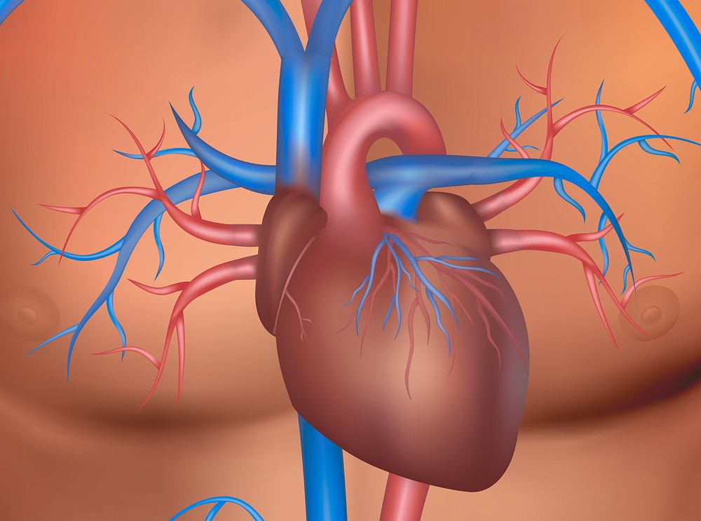 Prawidłowo funkcjonujące serce kurczy się rytmicznie, w równych odstępach czasu