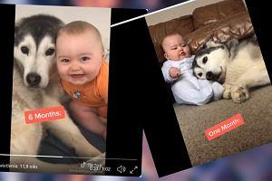 Rodzice pokazali, jak pies zareagował na noworodka. Teraz to najlepsi przyjaciele