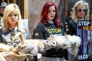 Priscilla Presley i Kim Basinger protestują przeciwko jedzeniu psów
