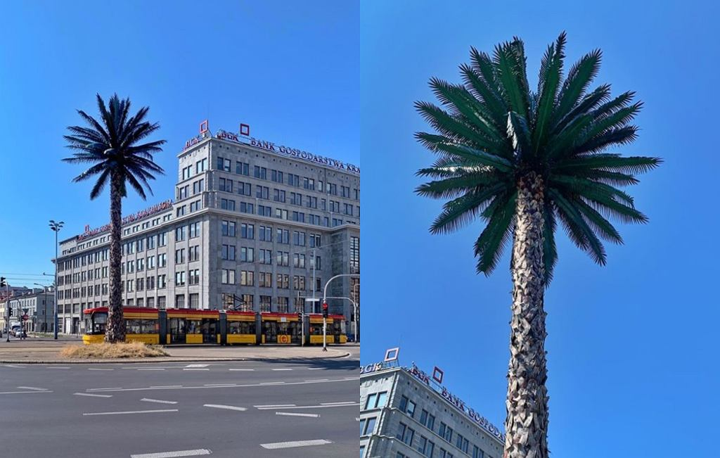 Palma na rondzie de Gaulle'a w Warszawie znowu jest zielona