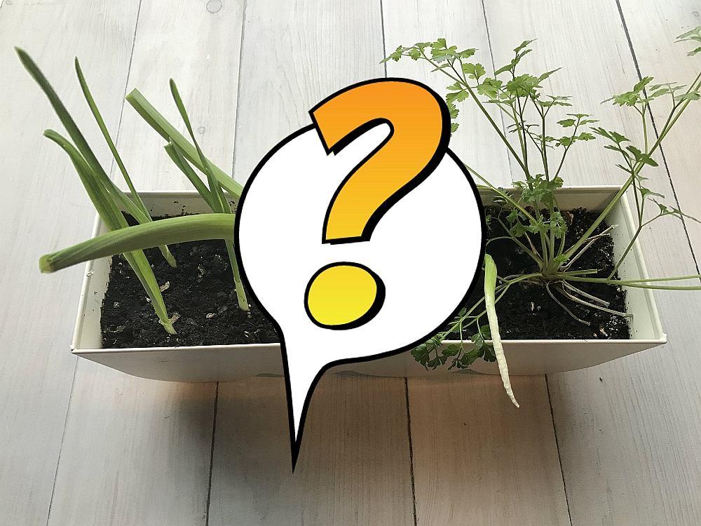 Spróbowaliśmy wyhodować rośliny z resztek. Czy się udało?