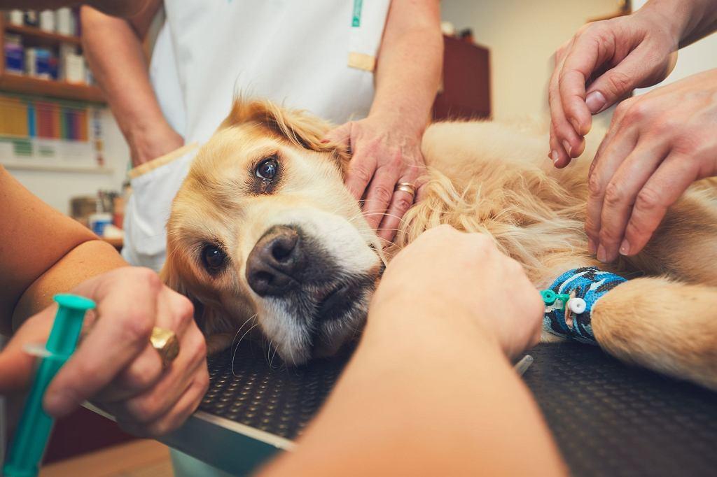Weterynarz apeluje o szczepienie zwierząt domowych i podkreśla, jak bardzo ważne jest to również dla ludzi