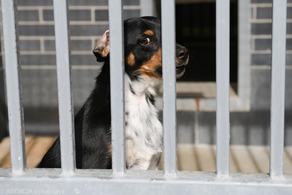 Pies oczekujący na adopcję w jednym ze schronisk (zdjęcie ilustracyjne)